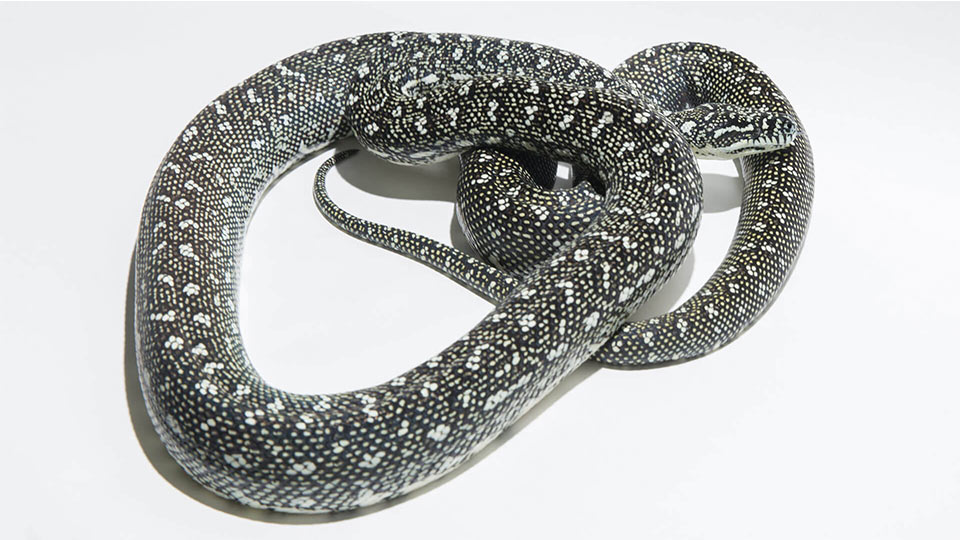 Diamantpython