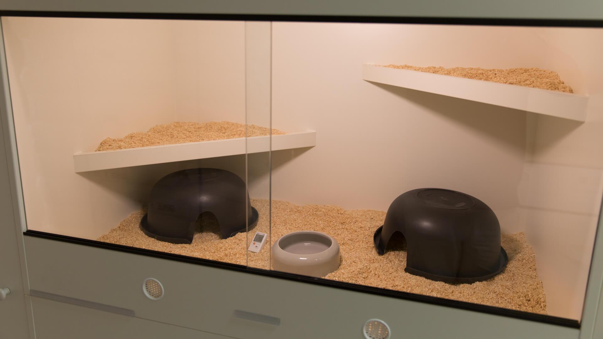 terrarium f r teppichpythons tipps von experten. Black Bedroom Furniture Sets. Home Design Ideas